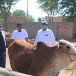 Better Cattle Farming at household Level A Session at Barkat Project 2- The NGO World Foundation