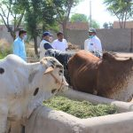 Better Cattle Farming at household Level A Session at Barkat Project 5- The NGO World Foundation